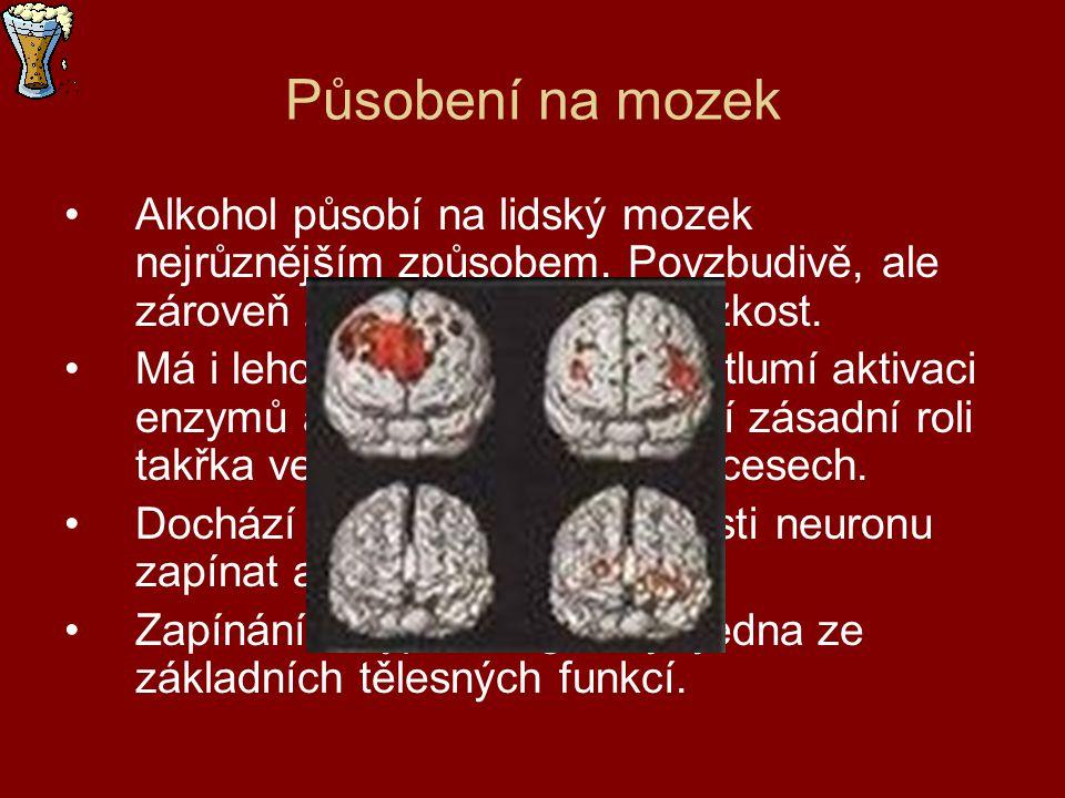Působení na mozek Alkohol působí na lidský mozek nejrůznějším způsobem. Povzbudivě, ale zároveň zklidňuje a otupuje úzkost. Má i lehce anestetický úči