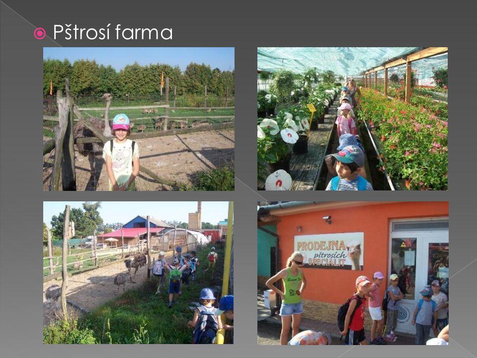  Pštrosí farma