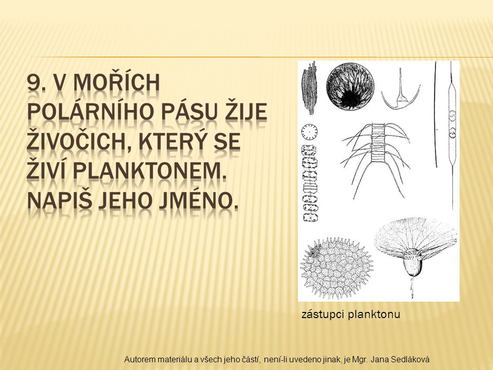 zástupci planktonu Autorem materiálu a všech jeho částí, není-li uvedeno jinak, je Mgr. Jana Sedláková