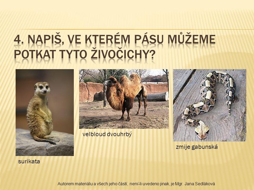 surikata velbloud dvouhrbý zmije gabunská Autorem materiálu a všech jeho částí, není-li uvedeno jinak, je Mgr.