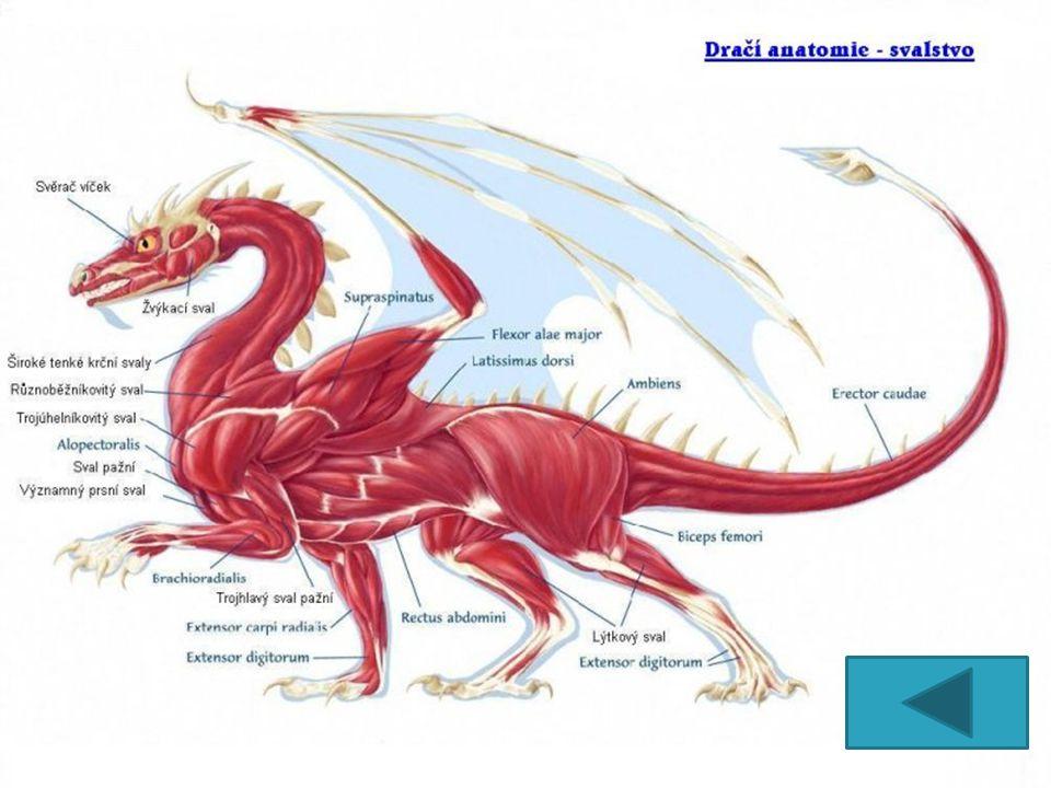 Jedná se o draka úhořovitého tvaru, s hruškovitě tvarovanou hlavou.