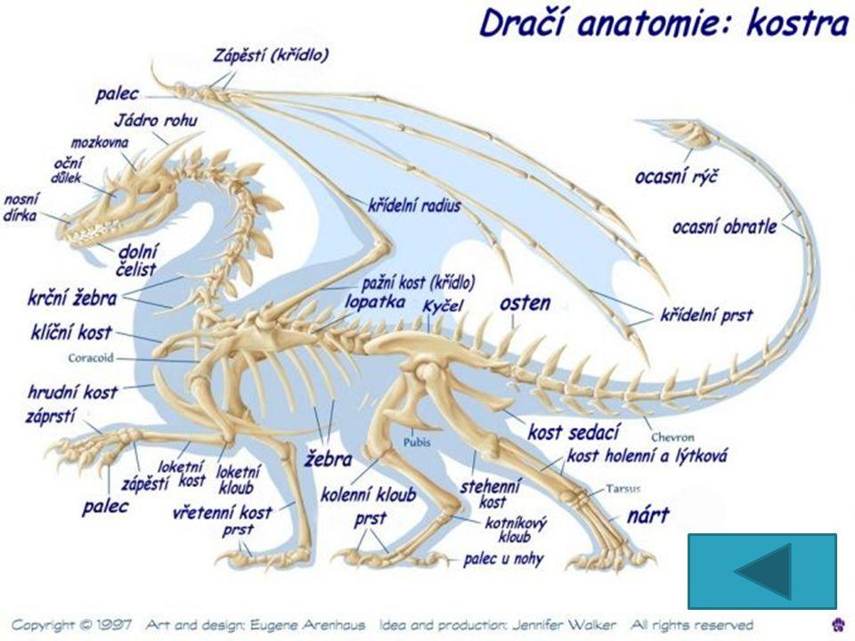 Dračí teorie Je spousta teorií o dracích.Ale jen jedna je pravdivá.