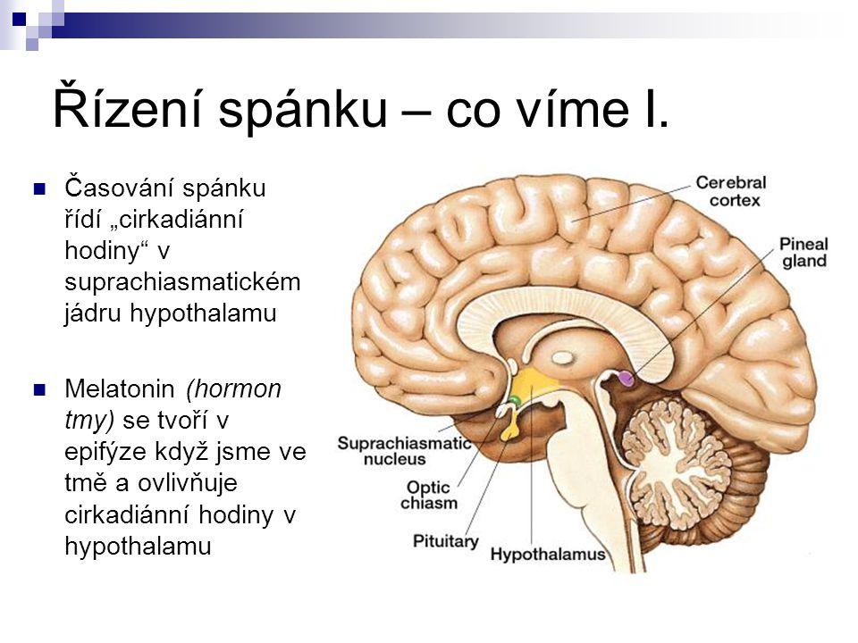 """Řízení spánku – co víme I. Časování spánku řídí """"cirkadiánní hodiny"""" v suprachiasmatickém jádru hypothalamu Melatonin (hormon tmy) se tvoří v epifýze"""
