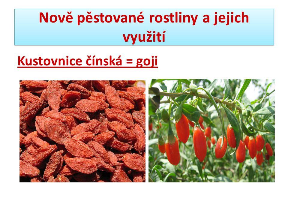Nově pěstované rostliny a jejich využití Kustovnice čínská = goji