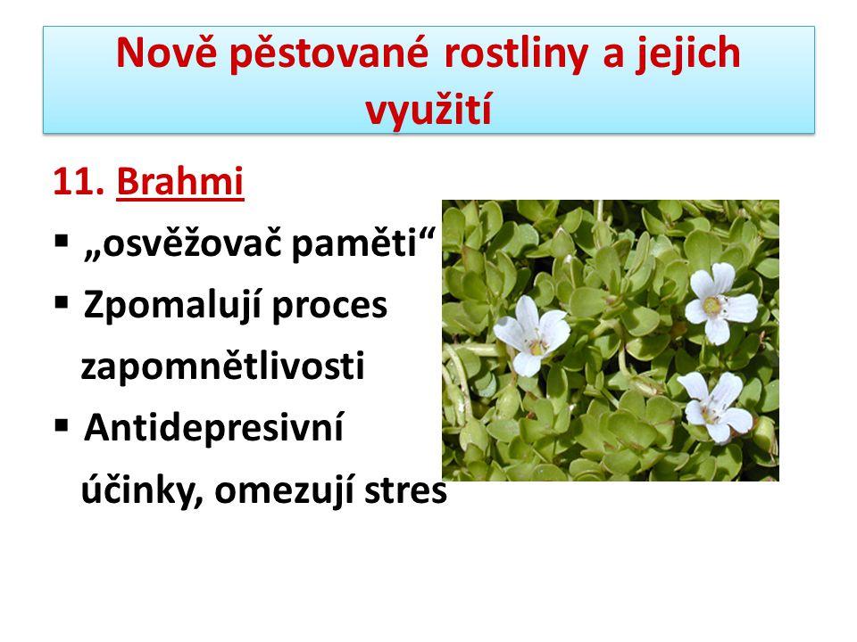 """Nově pěstované rostliny a jejich využití 11. Brahmi  """"osvěžovač paměti""""  Zpomalují proces zapomnětlivosti  Antidepresivní účinky, omezují stres"""