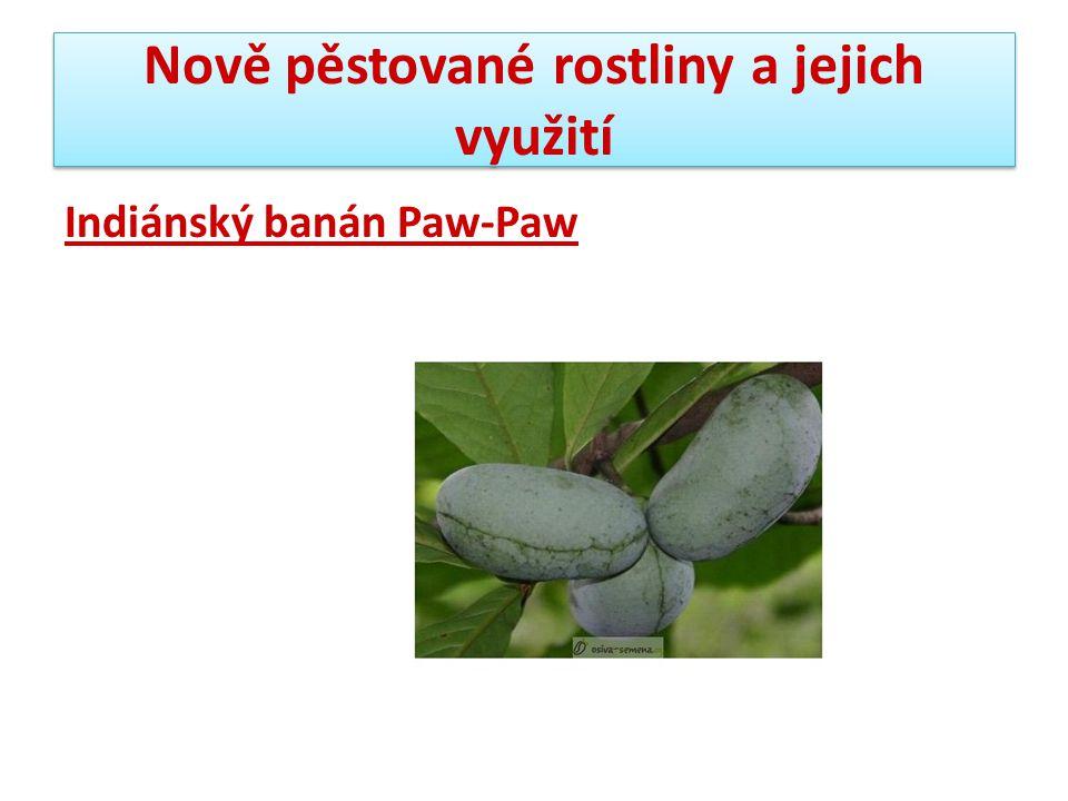 Nově pěstované rostliny a jejich využití Indiánský banán Paw-Paw