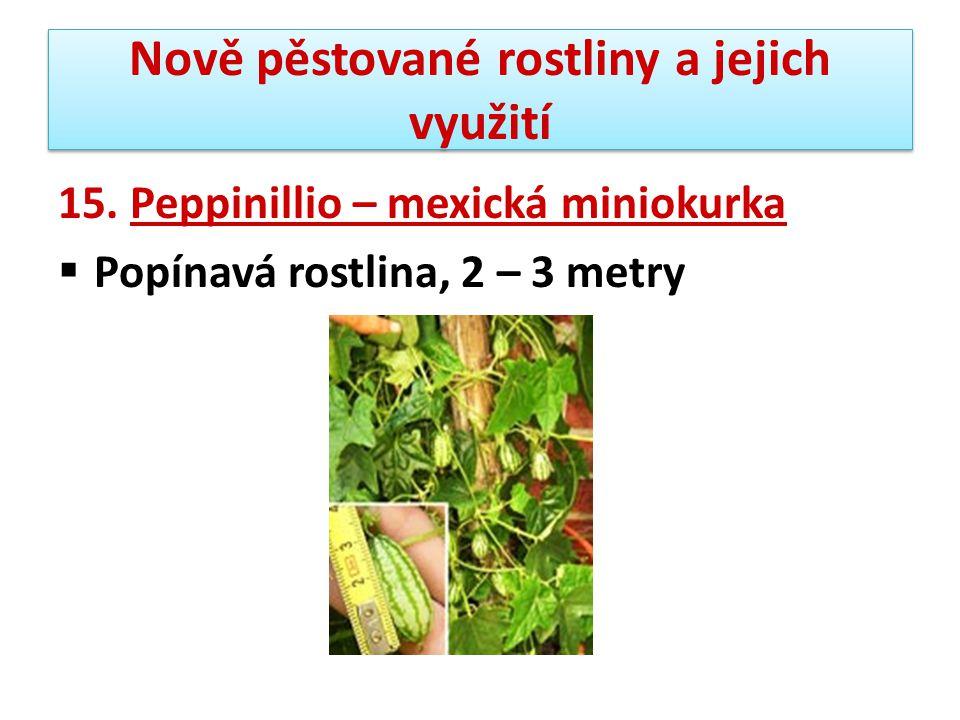 Nově pěstované rostliny a jejich využití 15. Peppinillio – mexická miniokurka  Popínavá rostlina, 2 – 3 metry