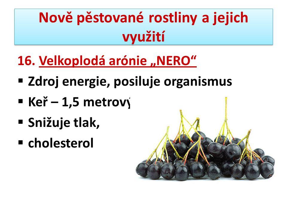 """Nově pěstované rostliny a jejich využití 16. Velkoplodá arónie """"NERO""""  Zdroj energie, posiluje organismus  Keř – 1,5 metrový  Snižuje tlak,  chole"""