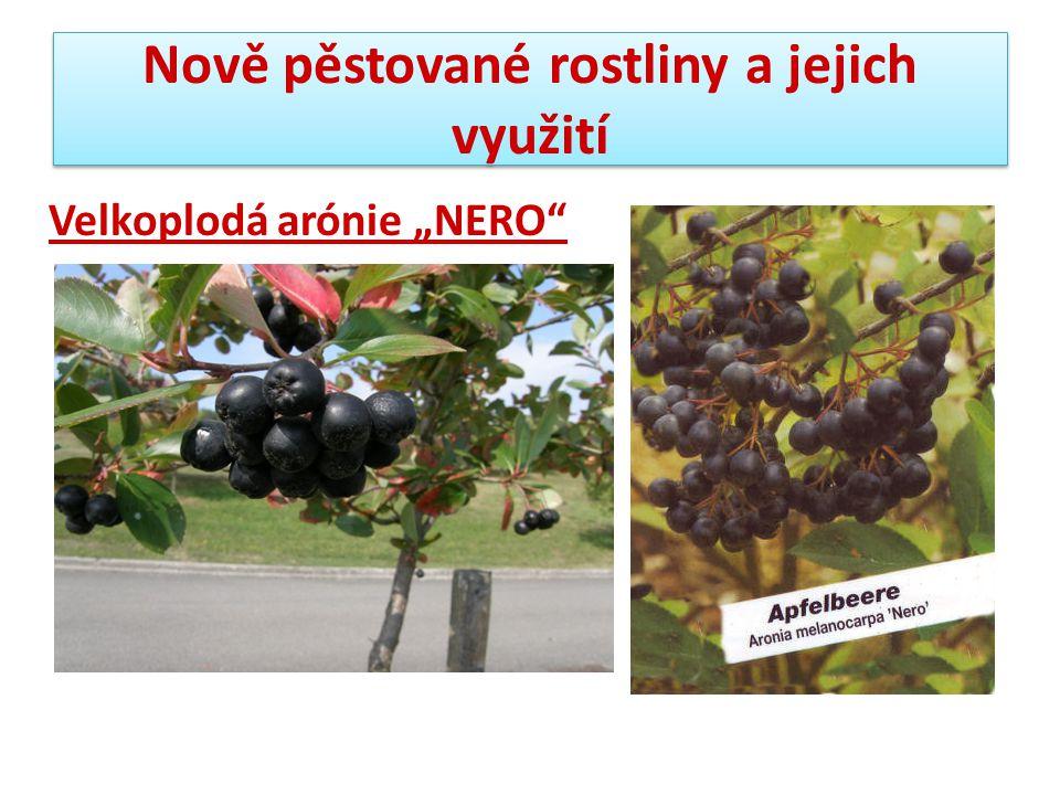 """Nově pěstované rostliny a jejich využití Velkoplodá arónie """"NERO"""""""