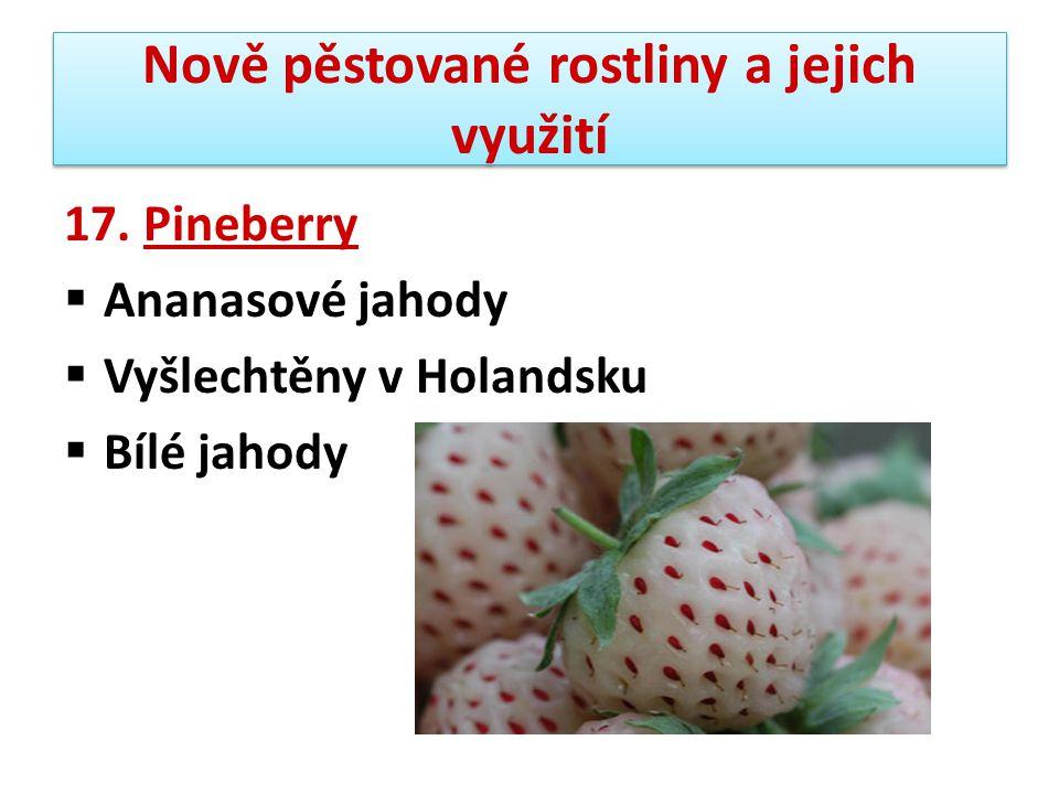 Nově pěstované rostliny a jejich využití 17. Pineberry  Ananasové jahody  Vyšlechtěny v Holandsku  Bílé jahody