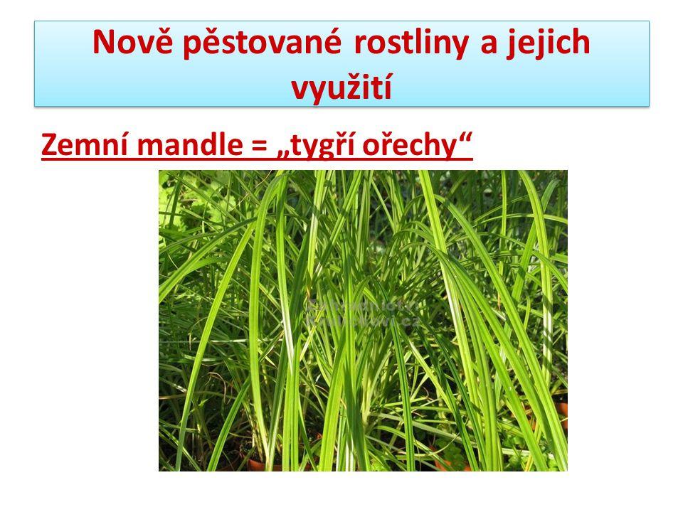 Nově pěstované rostliny a jejich využití 10.