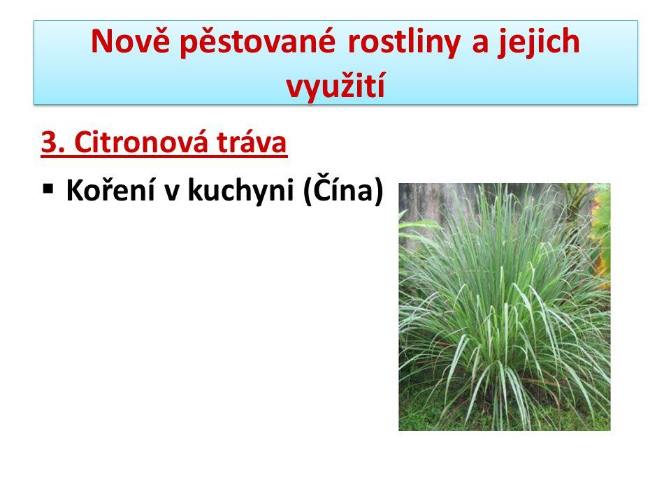 Nově pěstované rostliny a jejich využití 4.