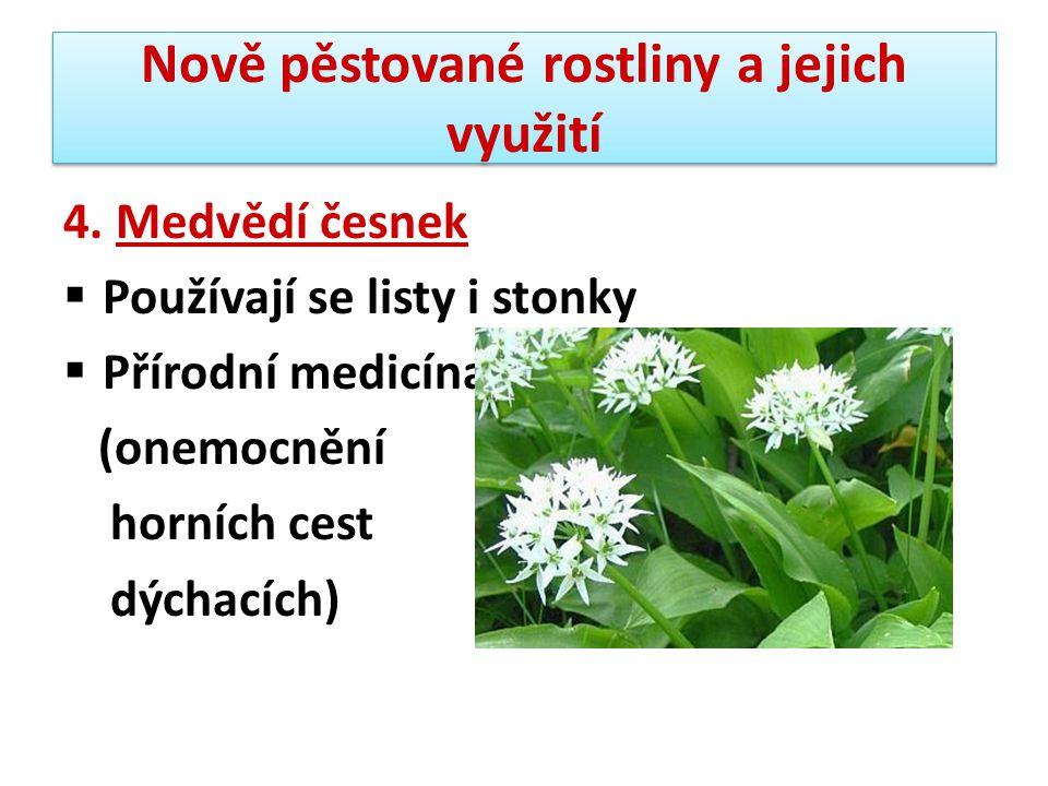 Nově pěstované rostliny a jejich využití 4. Medvědí česnek  Používají se listy i stonky  Přírodní medicína (onemocnění horních cest dýchacích)