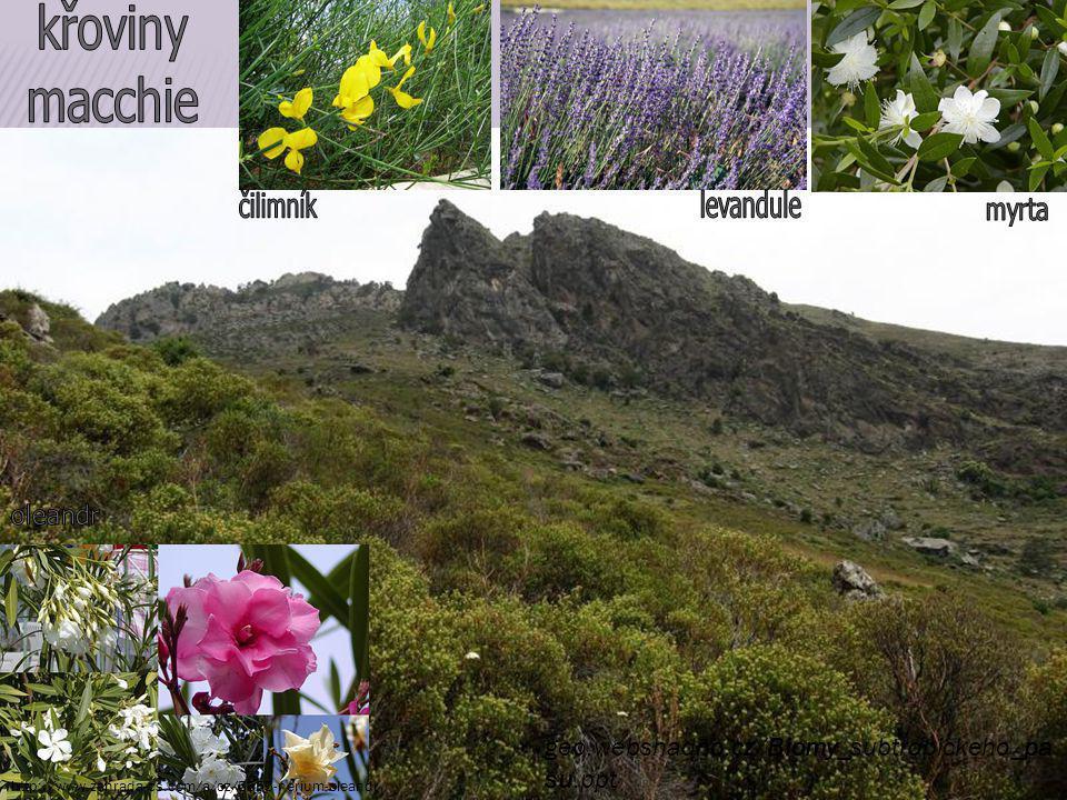 geo.websnadno.cz/Biomy_subtropickeho_pa su.ppt http://www.zahrada-cs.com/a/cz/5555-nerium-oleandr
