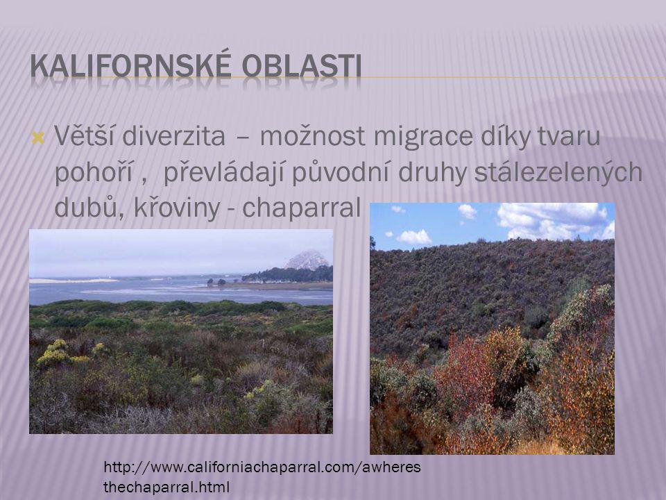  Větší diverzita – možnost migrace díky tvaru pohoří, převládají původní druhy stálezelených dubů, křoviny - chaparral http://www.californiachaparral