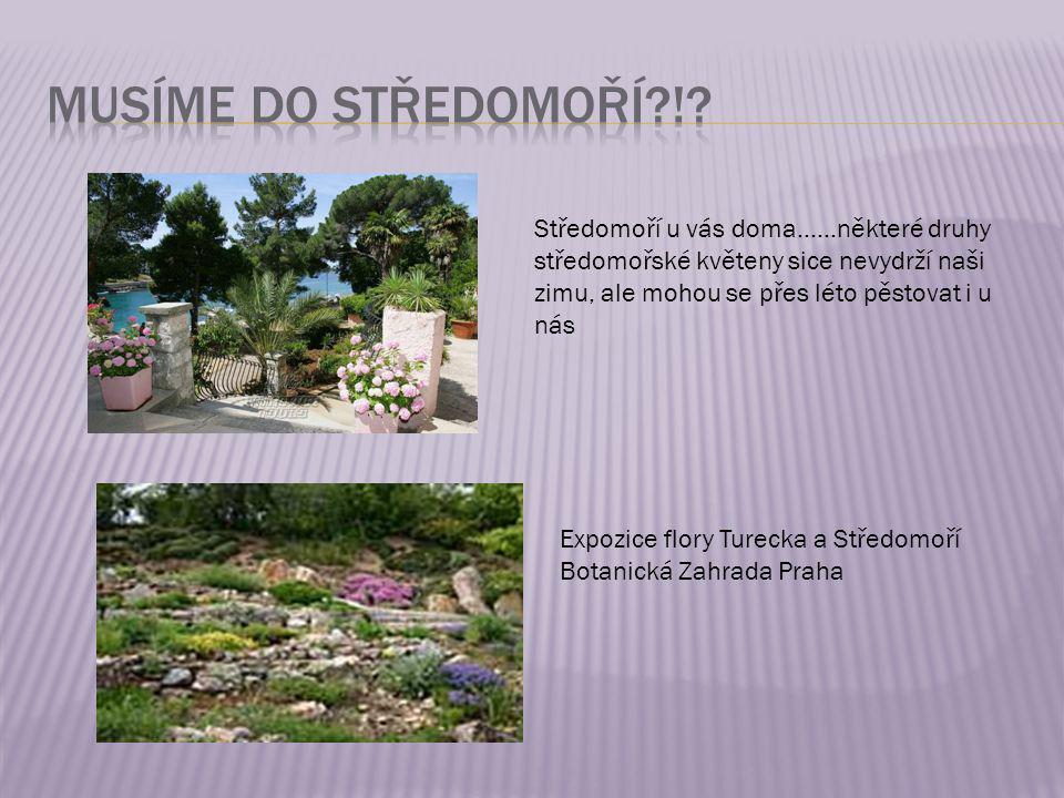 Středomoří u vás doma……některé druhy středomořské květeny sice nevydrží naši zimu, ale mohou se přes léto pěstovat i u nás Expozice flory Turecka a St