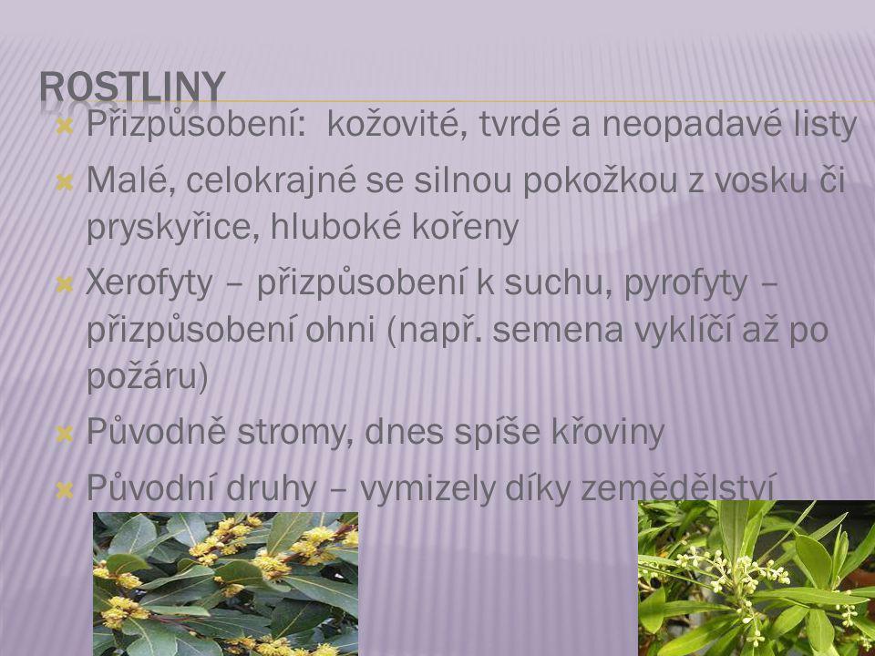 geo.websnadno.cz/Biomy_subtropickeho_pa su.ppt