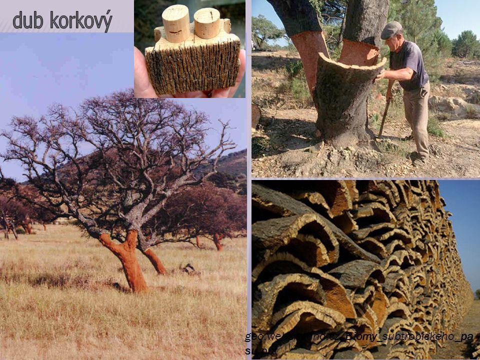 http://www.biolib.cz/cz/taxonimage/id1316/ http://fotka.atlasrostlin.cz/pistacie- prava/pistacia-lentiscus-1052