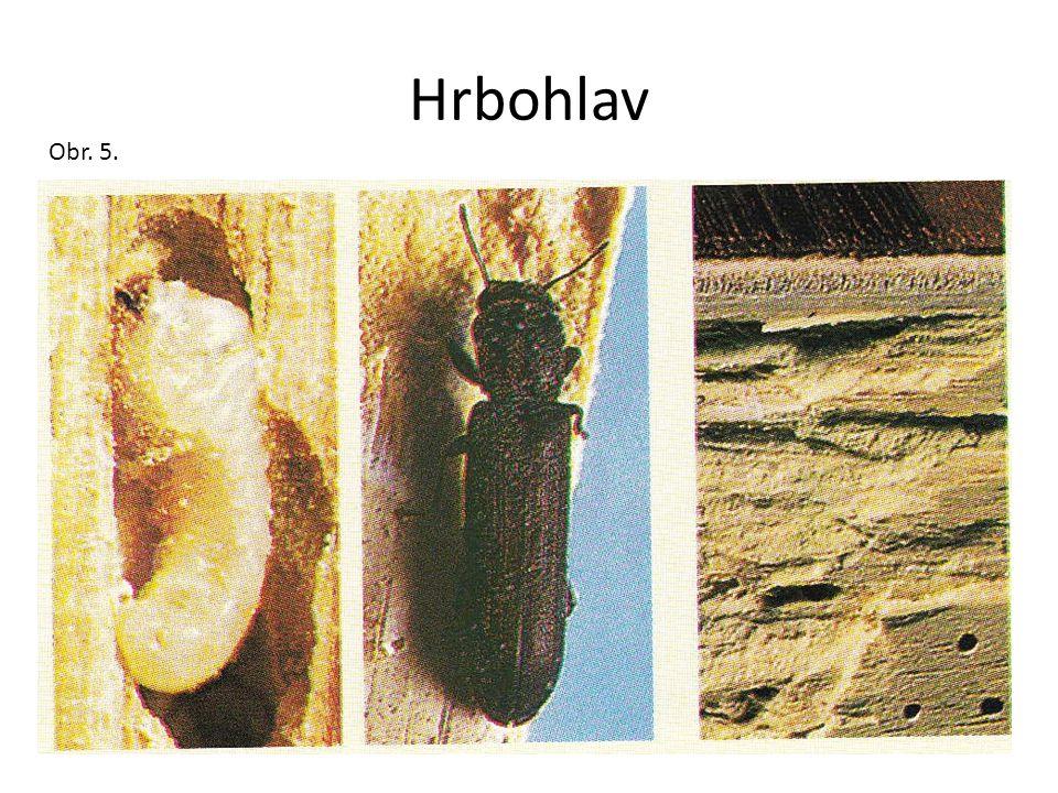 Hrbohlav Obr. 5.