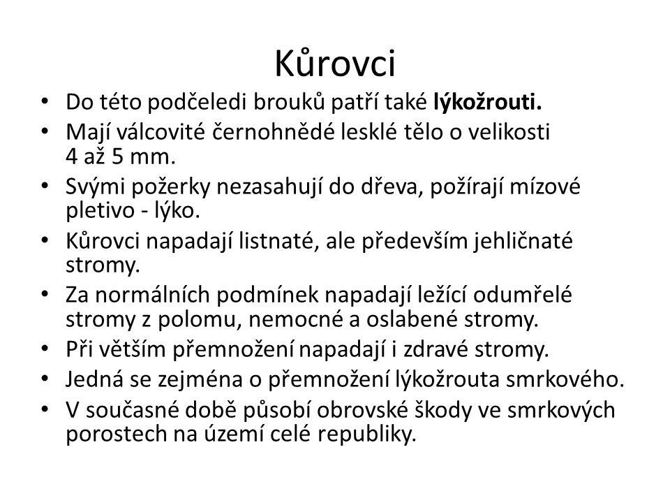 Seznam použitých zdrojů NOVÁK, V., HROZINKA, F., STARÝ, B.: Atlas hmyzích škůdců lesních dřevin: učební pomůcka pro les.