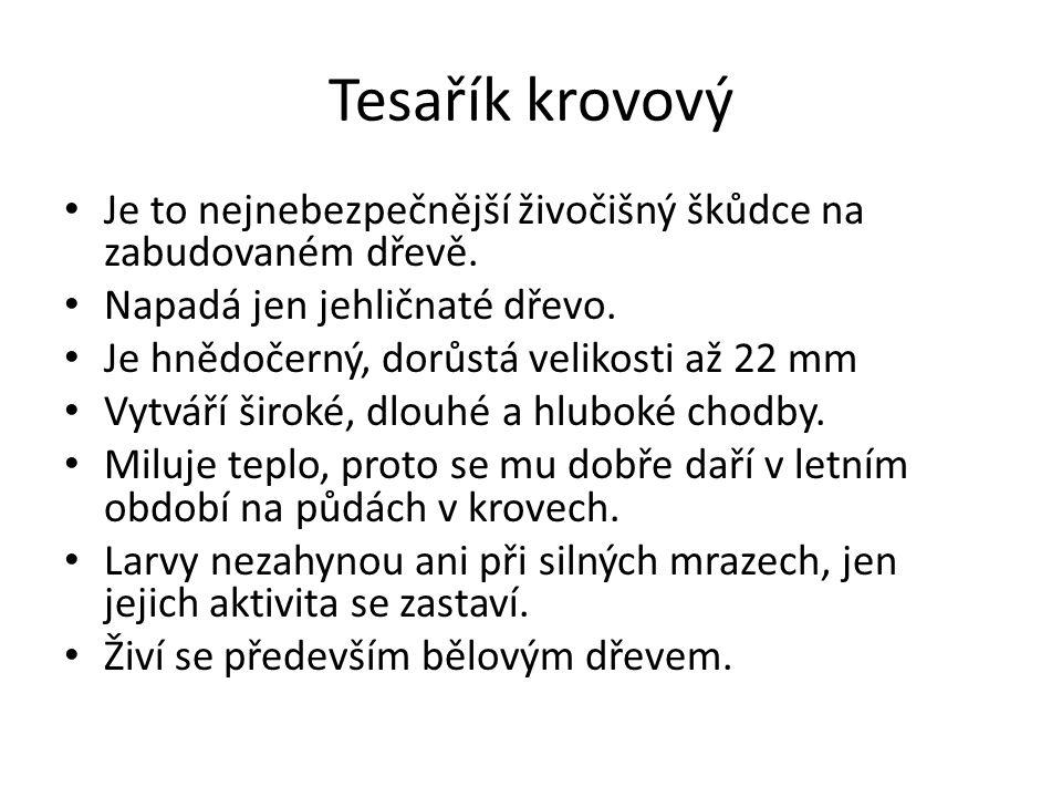 Tesařík krovový Obr. 3.
