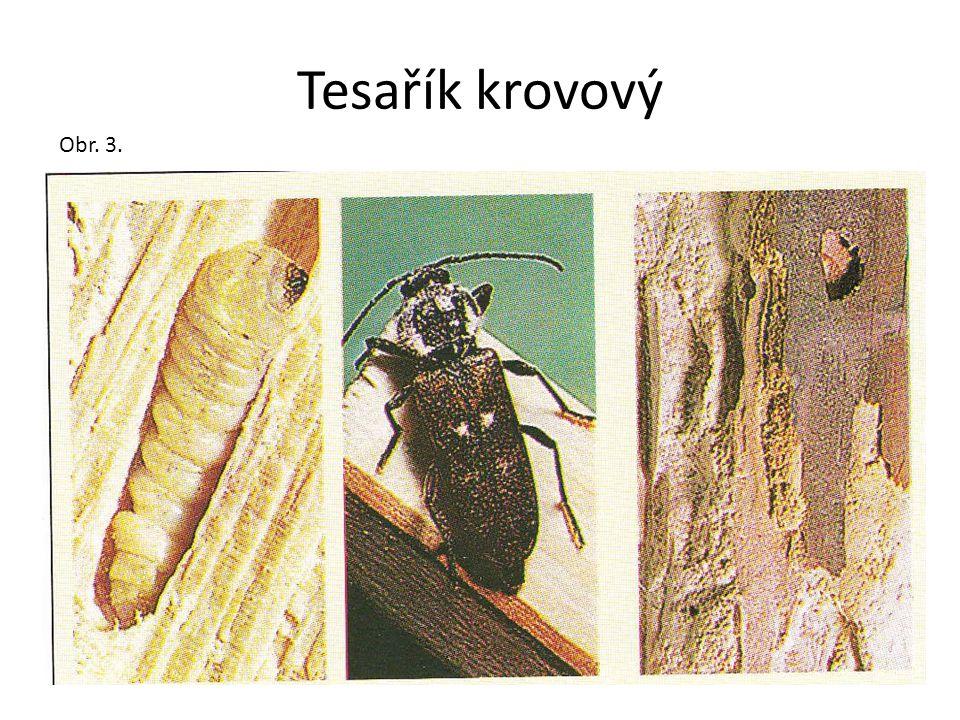 Červotoči Existuje celá řada druhů červotočů, kteří se liší zbarvením a velikostí.