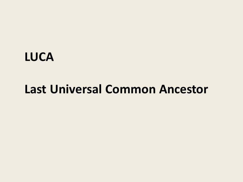 LUCA Last Universal Common Ancestor
