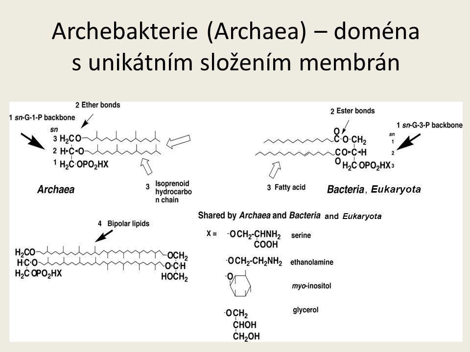Archebakterie (Archaea) – doména s unikátním složením membrán, Eukaryota and Eukaryota