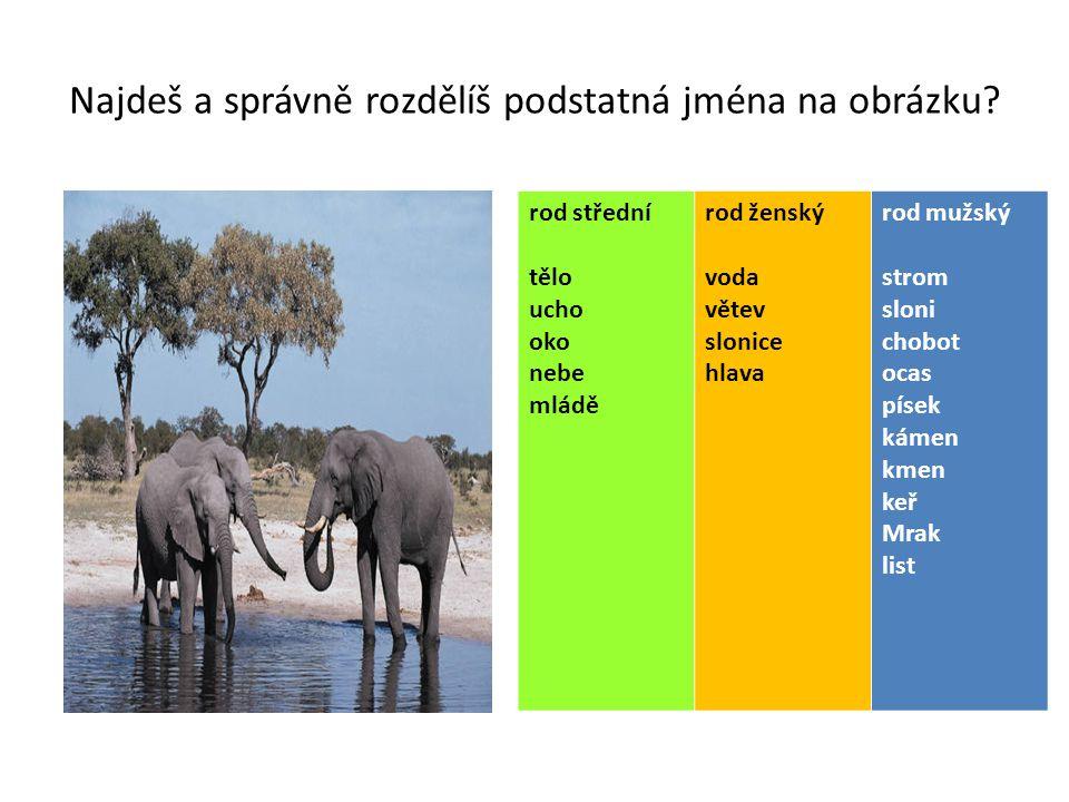 Najdeš a správně rozdělíš podstatná jména na obrázku? rod střední tělo ucho oko nebe mládě rod ženský voda větev slonice hlava rod mužský strom sloni