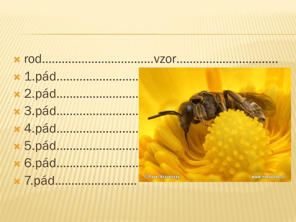  rod…………………………….vzor…………………………. 1.pád…………………….  2.pád…………………….
