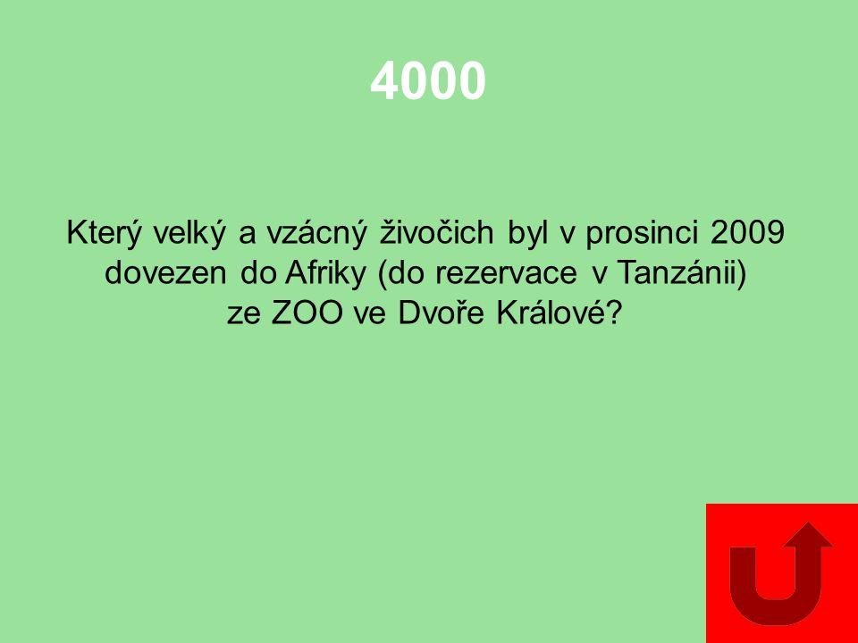 3000 Jmenujte alespoň jeden druh tzv. vzácného dřeva, které se těží v pralesích Afriky.