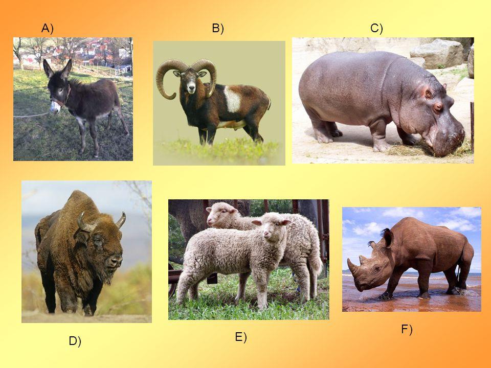 A)B)C) D) E) F)