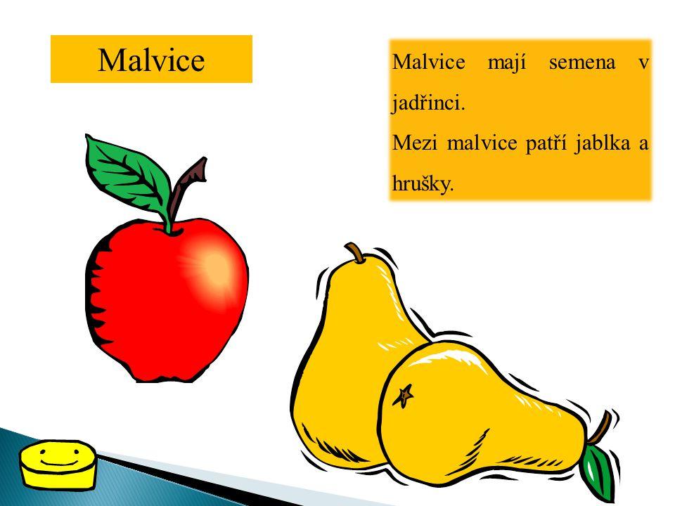 Malvice Malvice mají semena v jadřinci. Mezi malvice patří jablka a hrušky.