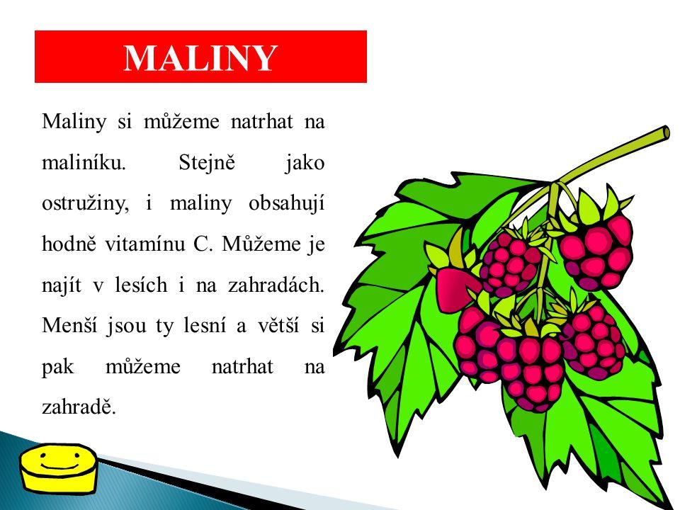 MALINY Maliny si můžeme natrhat na maliníku. Stejně jako ostružiny, i maliny obsahují hodně vitamínu C. Můžeme je najít v lesích i na zahradách. Menší