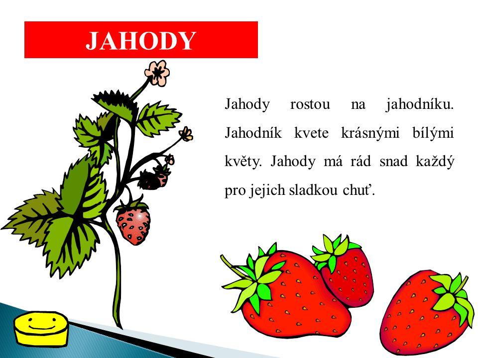 JAHODY Jahody rostou na jahodníku. Jahodník kvete krásnými bílými květy. Jahody má rád snad každý pro jejich sladkou chuť.