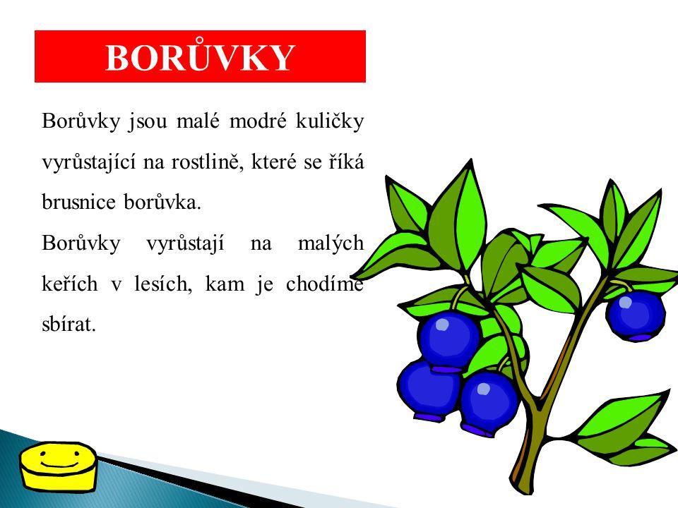 BORŮVKY Borůvky jsou malé modré kuličky vyrůstající na rostlině, které se říká brusnice borůvka. Borůvky vyrůstají na malých keřích v lesích, kam je c