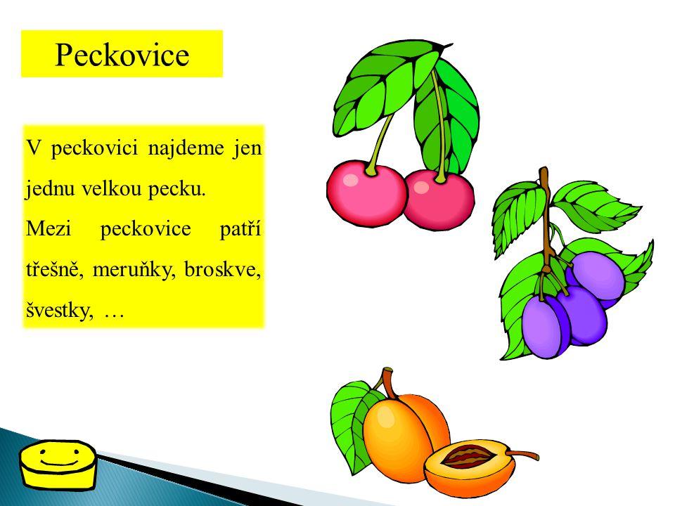 Peckovice V peckovici najdeme jen jednu velkou pecku. Mezi peckovice patří třešně, meruňky, broskve, švestky, …