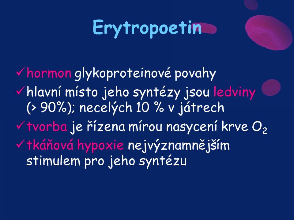 hormon glykoproteinové povahy hlavní místo jeho syntézy jsou ledviny (> 90%); necelých 10 % v játrech tvorba je řízena mírou nasycení krve O 2 tkáňová