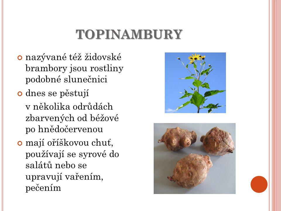 TOPINAMBURY nazývané též židovské brambory jsou rostliny podobné slunečnici dnes se pěstují v několika odrůdách zbarvených od béžové po hnědočervenou mají oříškovou chuť, používají se syrové do salátů nebo se upravují vařením, pečením