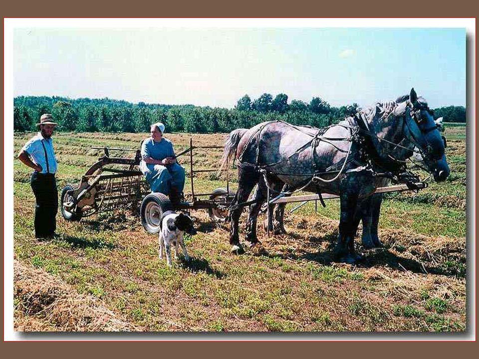 Vedou sice těžký, ale zato zdravý život. Hodně pracují na polích, jedí zdravou potravu, bez alkoholu a tabáku a proto se Amish těší výbornému zdraví.