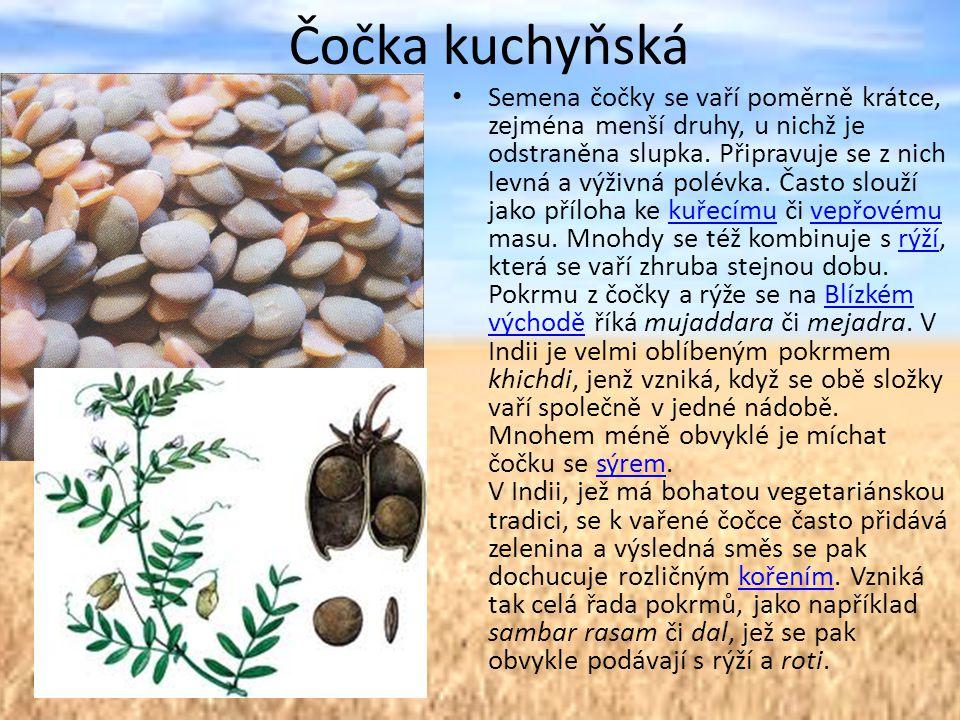 Čočka kuchyňská Semena čočky se vaří poměrně krátce, zejména menší druhy, u nichž je odstraněna slupka.