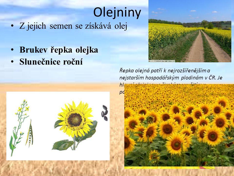 Olejniny Z jejich semen se získává olej Brukev řepka olejka Slunečnice roční Řepka olejná patří k nejrozšířenějším a nejstarším hospodářským plodinám v ČR.