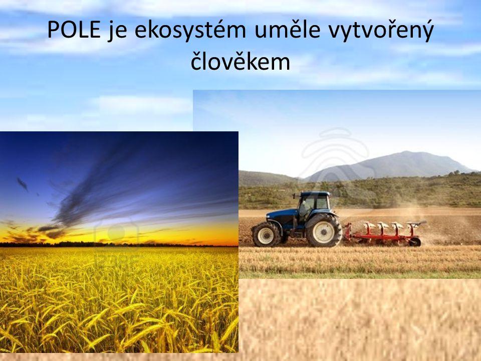 POLE je ekosystém uměle vytvořený člověkem
