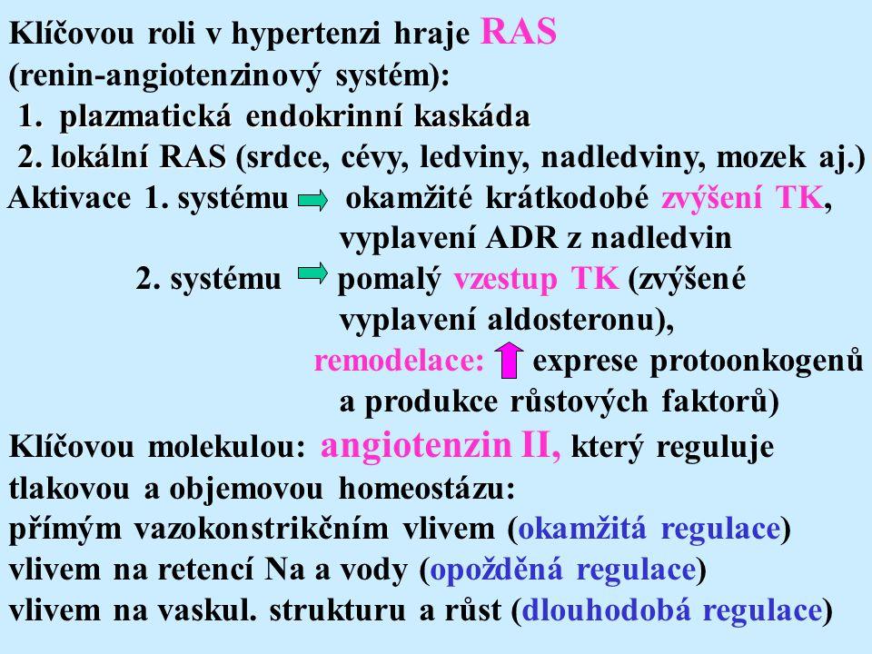Klíčovou roli v hypertenzi hraje RAS (renin-angiotenzinový systém): 1. plazmatická endokrinní kaskáda 1. plazmatická endokrinní kaskáda 2. lokální RAS
