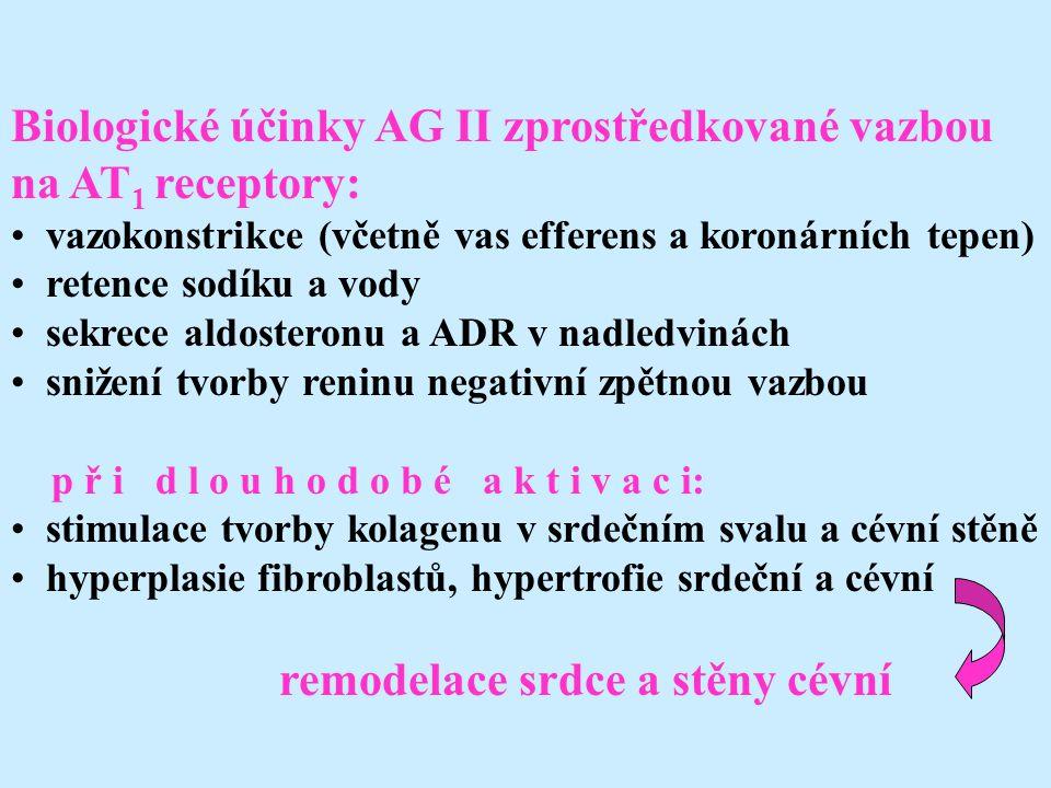 Biologické účinky AG II zprostředkované vazbou na AT 1 receptory: vazokonstrikce (včetně vas efferens a koronárních tepen) retence sodíku a vody sekrece aldosteronu a ADR v nadledvinách snižení tvorby reninu negativní zpětnou vazbou p ř i d l o u h o d o b é a k t i v a c i: stimulace tvorby kolagenu v srdečním svalu a cévní stěně hyperplasie fibroblastů, hypertrofie srdeční a cévní remodelace srdce a stěny cévní