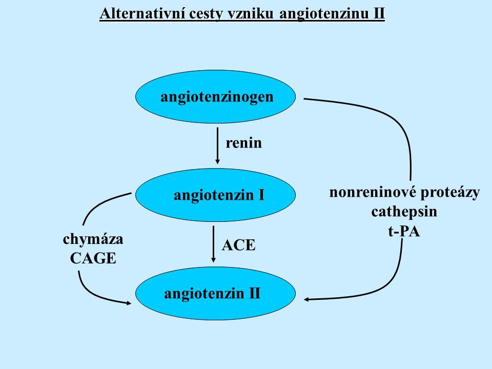 Alternativní cesty vzniku angiotenzinu II angiotenzinogen angiotenzin I angiotenzin II renin ACE nonreninové proteázy cathepsin t-PA chymáza CAGE