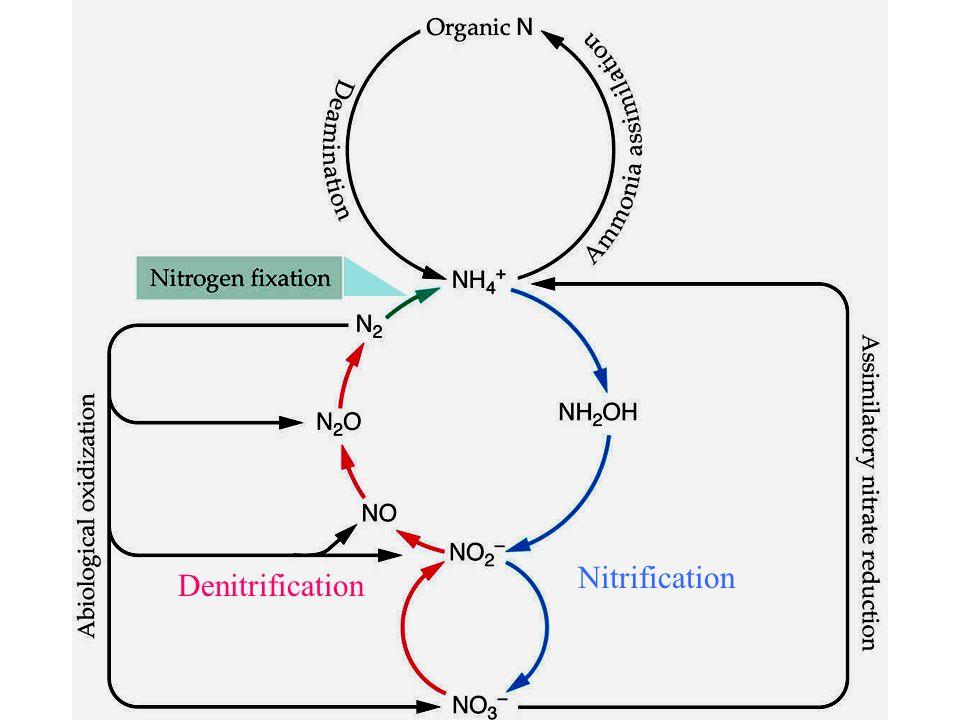 Nitrification Denitrification