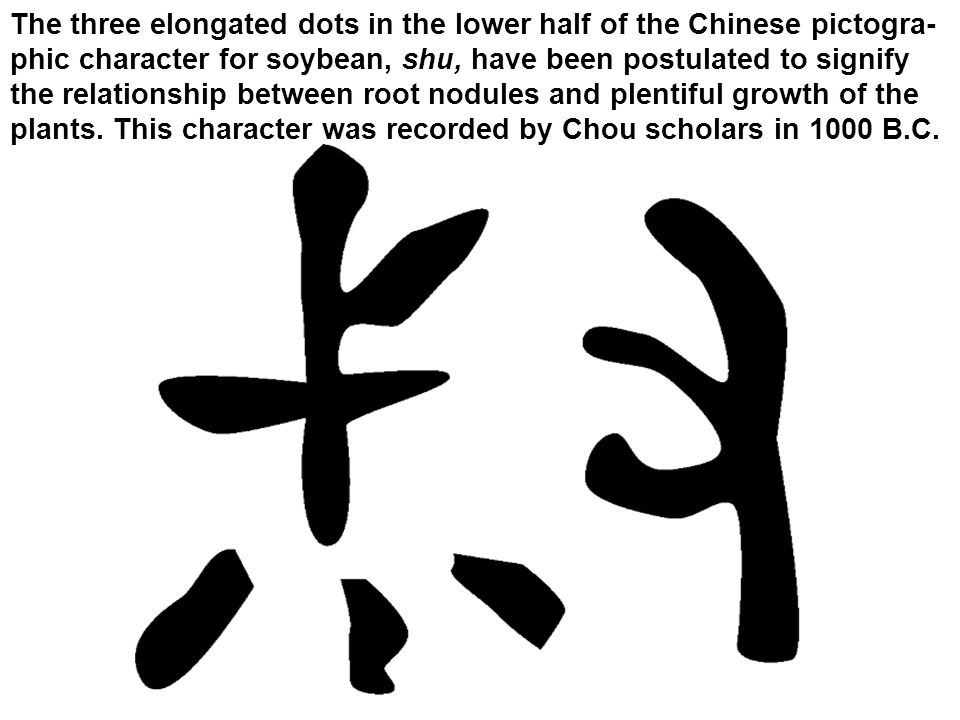 The three elongated dots in the lower half of the Chinese pictogra- phic character for soybean, shu, have been postulated to signify the relationship