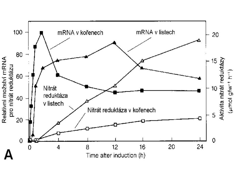 reduktasa dusičnanu reduktasa dusitanu