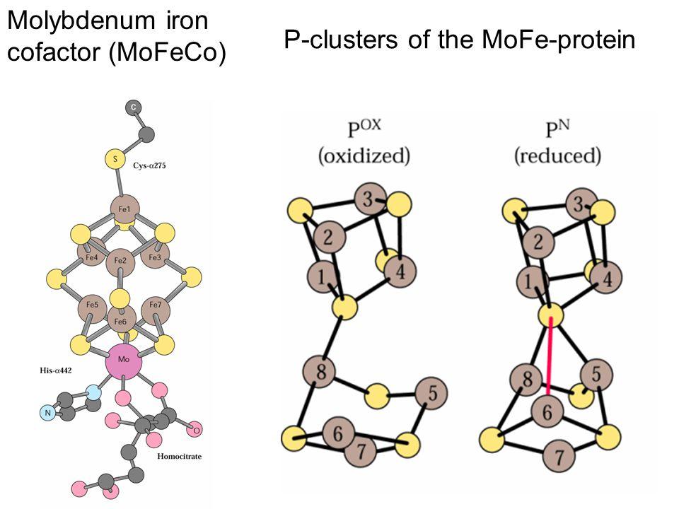 P-clusters of the MoFe-protein Molybdenum iron cofactor (MoFeCo)